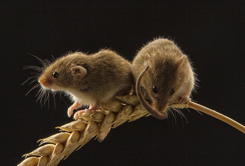 Studio night – Little animals! – MarilynJane Photo Blog