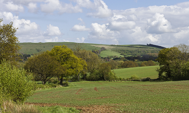 Towards Hambledon Hill