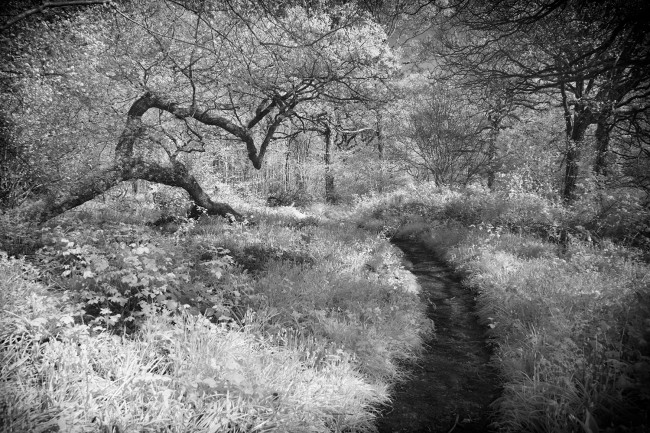 Piddles wood infrared