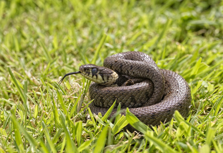 ядовитые змеи урала фото удобства можете сразу