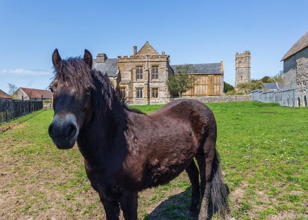 Muchelney Abbey with Horse