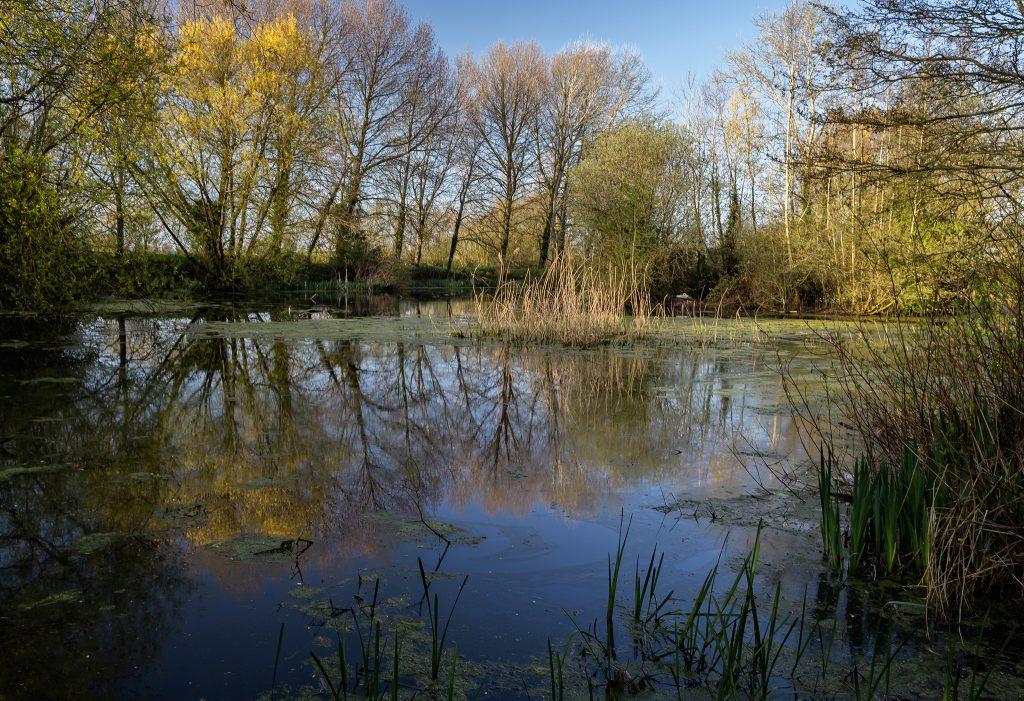 Wild lake near Thorney